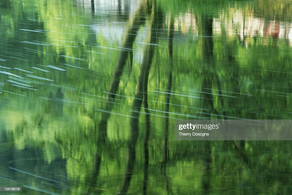 TREES REFLECTED IN WATER : Stockfoto