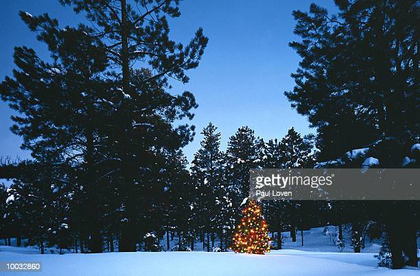 christmas tree in pine forest in snow in north arizona - arizona christmas stock pictures, royalty-free photos & images