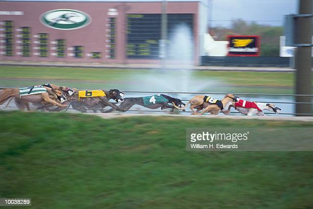 GREYHOUND RACE TRACK IN HOUSTON, TEXAS