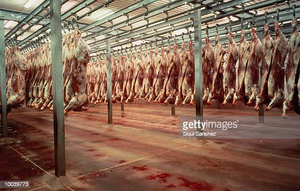 SLAUGHTERHOUSE IN HUESCA, SPAIN