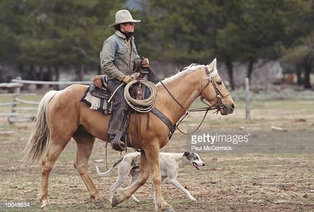 COWBOY & HOUND RIDING TO CATTLE FARM