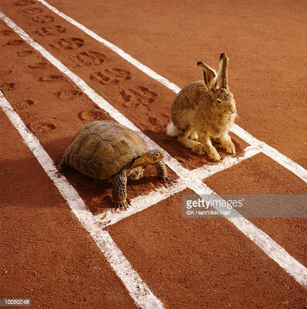 tortoise and hare on track - hare stock pictures, royalty-free photos & images