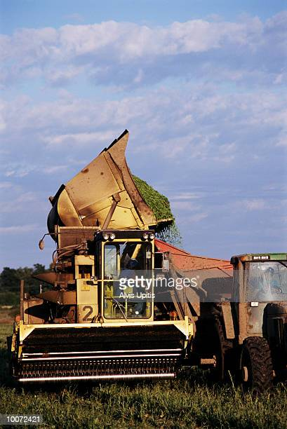 green snap bean harvest in wisconsin - iron_county,_wisconsin stock pictures, royalty-free photos & images