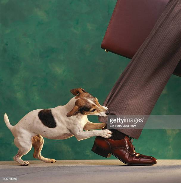 DOG'NIPPING AT YOUR HEELS'