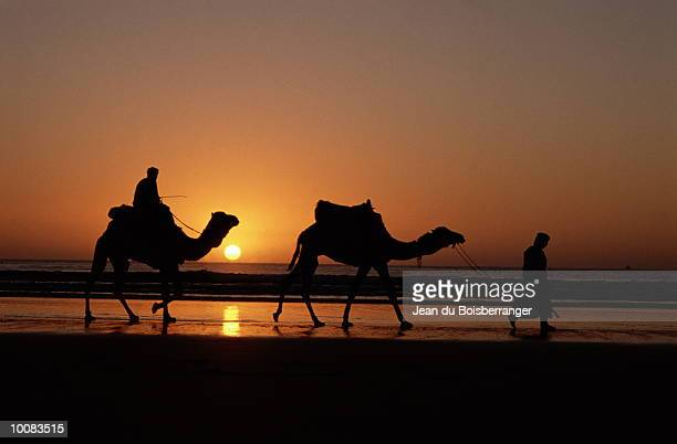 silhouette of a caravan in agadir, morocco - agadir stock pictures, royalty-free photos & images