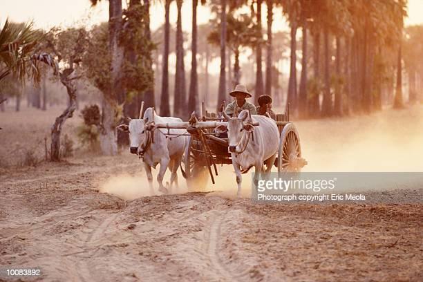 farmer going to market in burma - ox cart stock-fotos und bilder