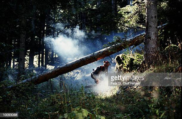 WOODCUTTER IN FRANCE