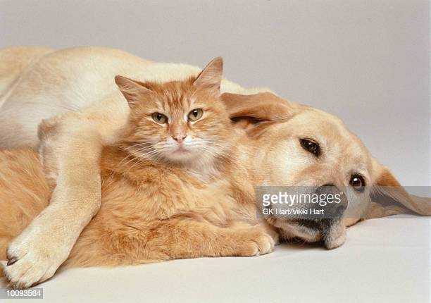 cat and dog together - gato fotografías e imágenes de stock