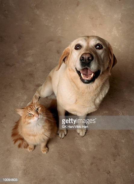 cat and dog - two animals stock pictures, royalty-free photos & images