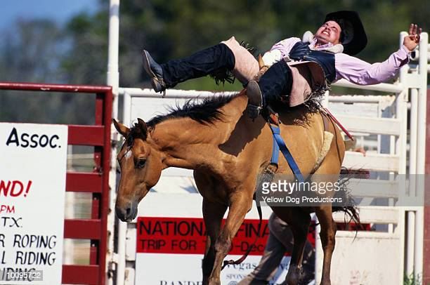 BUCKING BRONCO AT RODEO