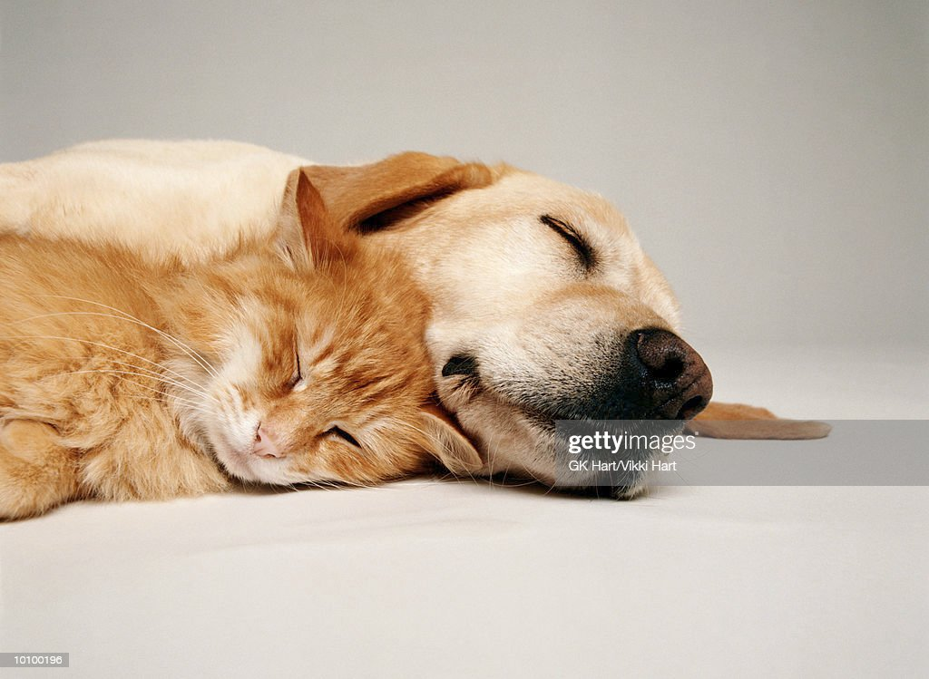 CAT AND DOG TOGETHER : Stock Photo