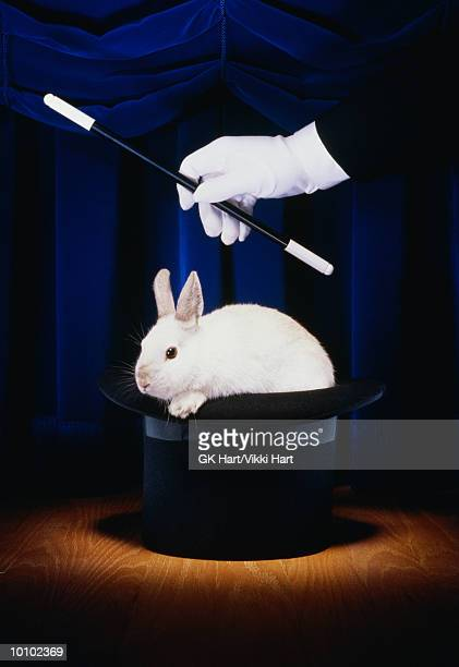 RABBIT IN HAT WITH MAGICIAN IN SPOTLIGHT