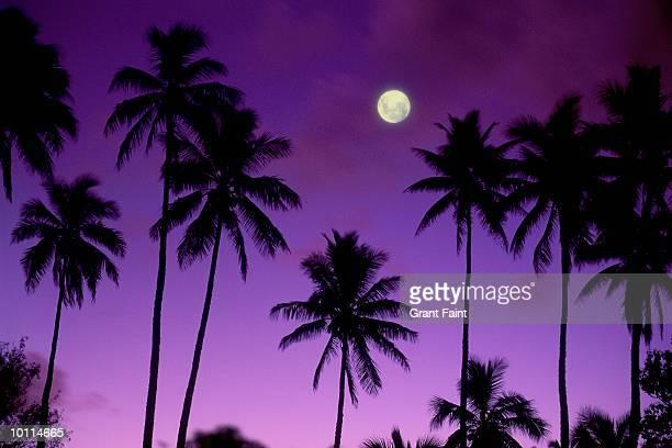 PALM TREES- COOK ISLANDS POLYNESIA