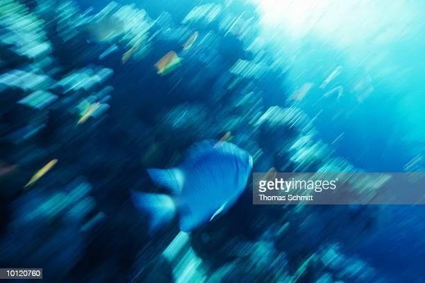 blurred fish at ras um sid in the red sea, egypt - um animal stockfoto's en -beelden