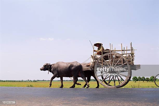 BUFFALO CART WITH FARMER AT TAY NINH, VEITNAM