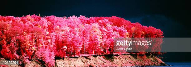 foliage, apostle island, lake superior, wisconsin - iron_county,_wisconsin stock pictures, royalty-free photos & images