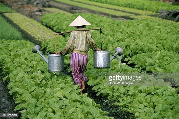 market gardening nha trang, vietnam - reporterstil stock-fotos und bilder