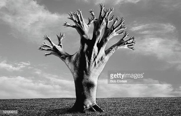 tree of hands - pareidolia stock pictures, royalty-free photos & images