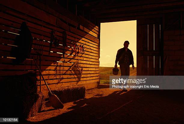 farmer in barn - dawn stock pictures, royalty-free photos & images