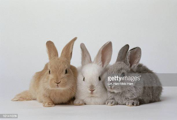 BABY BUNNIES, BROWN, WHITE, GRAY