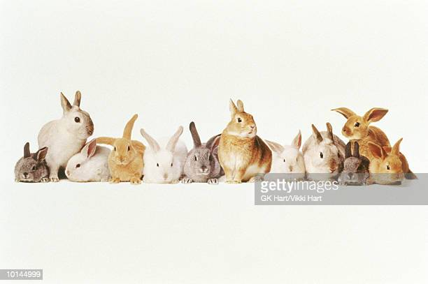 lotza bunnies in a row - large group of animals stock pictures, royalty-free photos & images