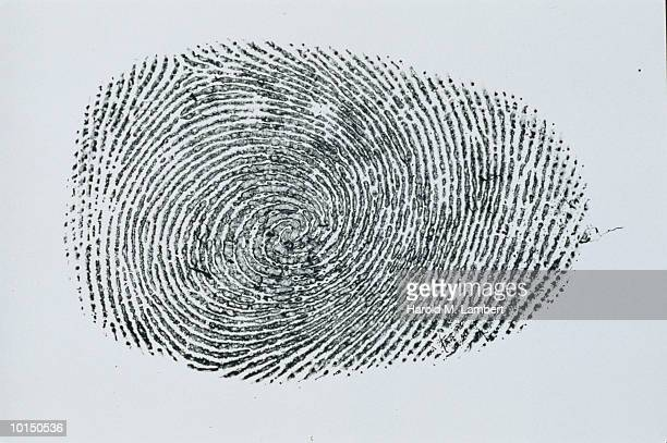 LARGE SPIRAL FINGERPRINT, CIRCA 1950S