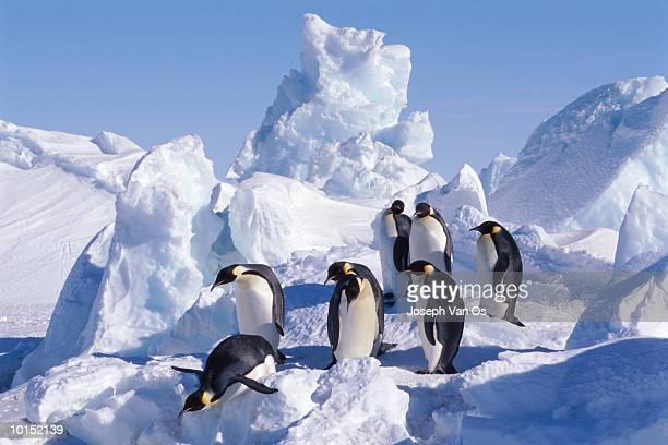 emperor penguins weddell sea - weddell sea fotografías e imágenes de stock