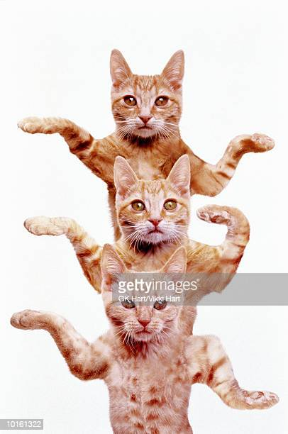 THREE EGYPTIAN CATS