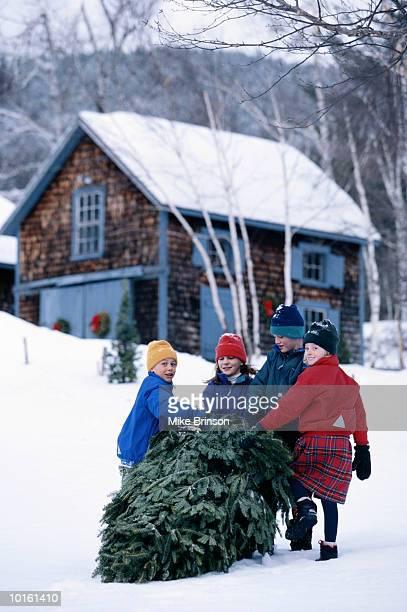 children pulling christmas tree to bark, maine - feierliche veranstaltung stock-fotos und bilder