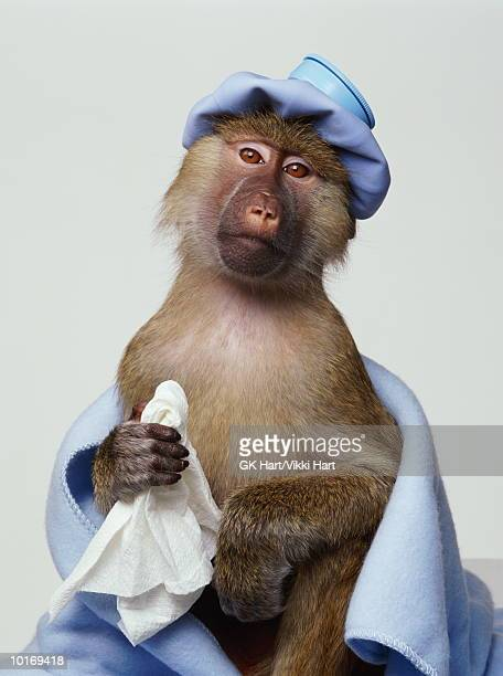 OLIVE BABOON WITH HOT WATER BOTTLE