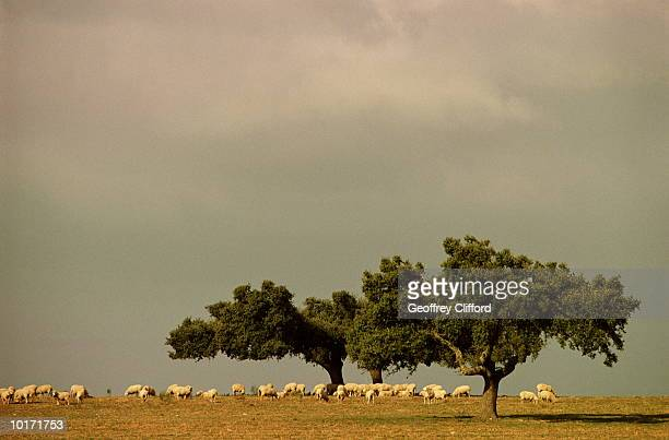 the alentejo region, portugal - cork tree stock photos and pictures