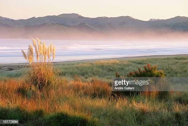 grass on waikanae beach, gisborne - gisborne stock photos and pictures