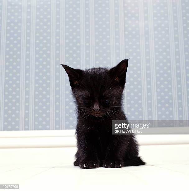 BLACK KITTEN SLEEPING