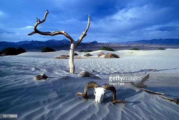 death valley, usa - death valley national park stock pictures, royalty-free photos & images