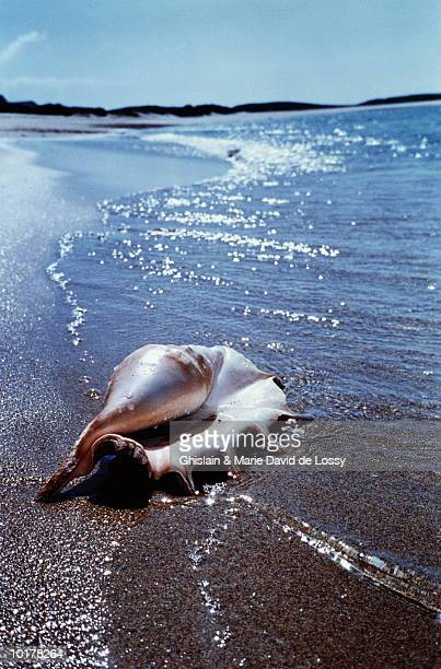 SEASHELL ON SAND, CLOSE-UP