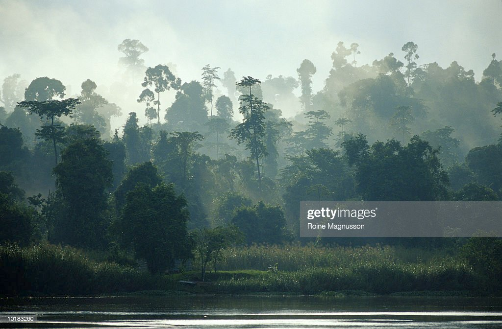 RAINFOREST AND RIVER, BORNEO, MALAYSIA : Stock Photo