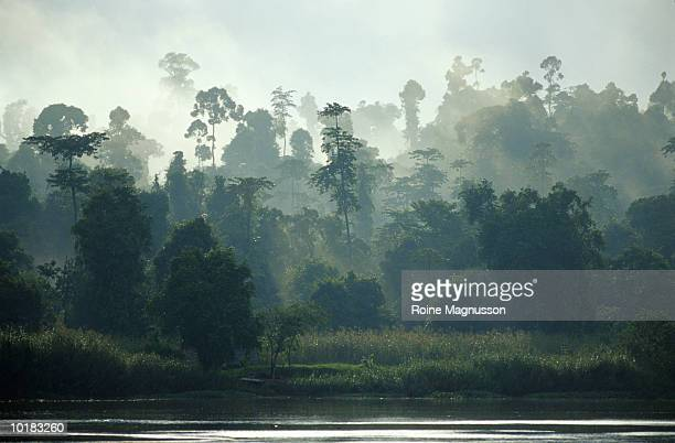 RAINFOREST AND RIVER, BORNEO, MALAYSIA
