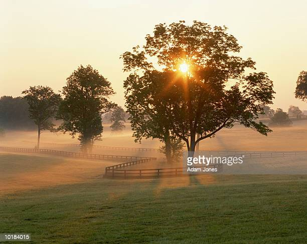 foggy sunrise on horse farm, kentucky, usa - kentucky stock pictures, royalty-free photos & images