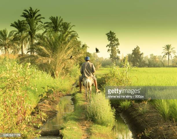 EGYPT COUNTRY