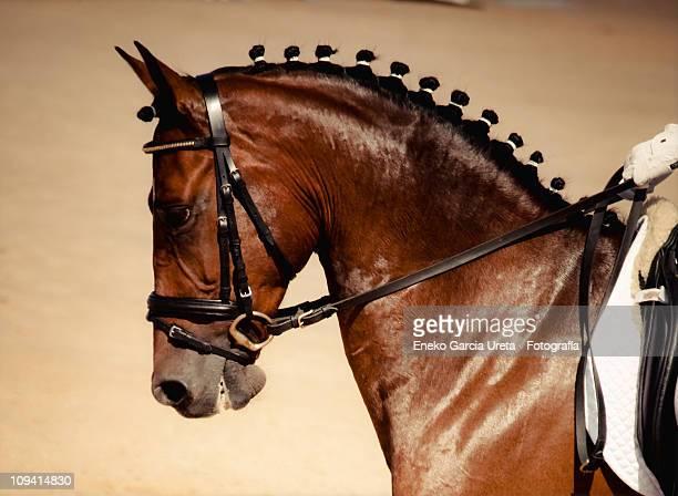 equus - paard paardachtigen stockfoto's en -beelden