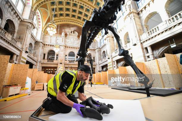 A team of specialists who are tasked with piecing together the iconic dinosaur Dippy unpack bespoke crates containing the bone structure at...