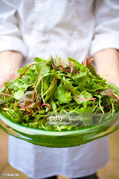 chef holding plate of verdant green salad - green salad stock pictures, royalty-free photos & images