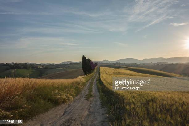 road in wheat fields in tuscany - san miniato stock pictures, royalty-free photos & images