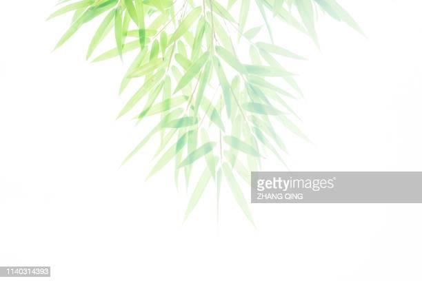 竹の葉っぱ、竹、新鮮な緑、夏、春