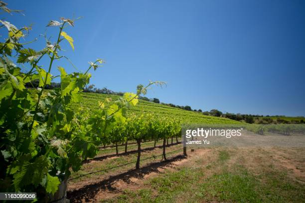 mclaren vale wineyard - valley stock pictures, royalty-free photos & images