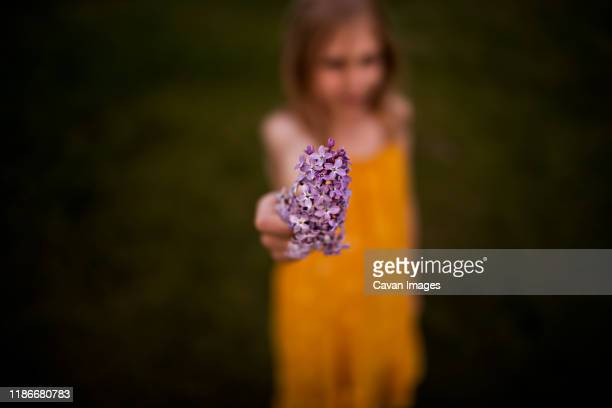 9 year old girl holding lilacs with blurred out background - girls 12 year old pic stock photos and pictures