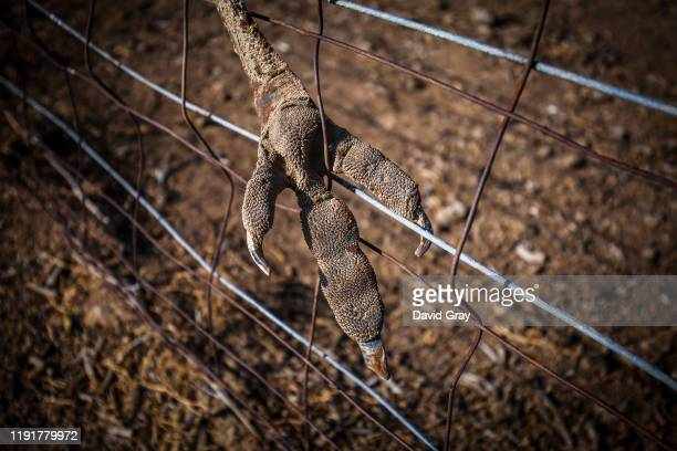 The remains of an emu that got trapped on a fence can be seen in a droughtaffected paddock on May McKeownu2019s property of 'Long View' on October 7...