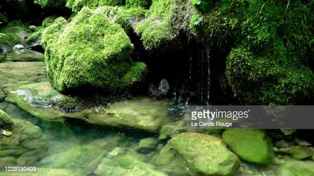 full moss covered rocks - 湧水 ストックフォトと画像