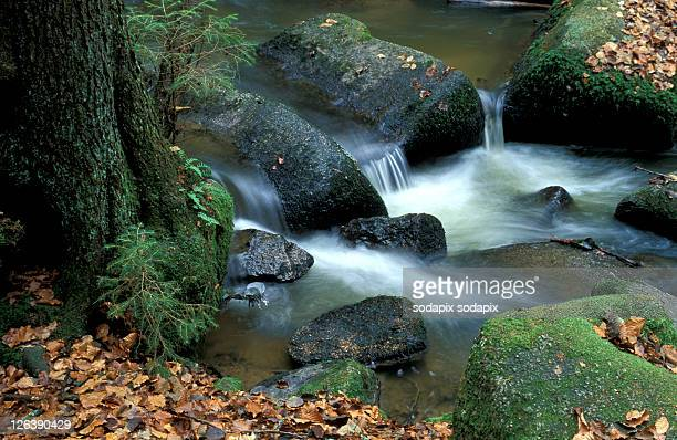 - - wasser stock pictures, royalty-free photos & images