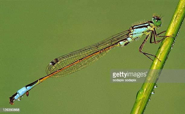 - - caenorhabditis elegans stock pictures, royalty-free photos & images